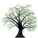 Vector tree design. A beautiful  tree design Stock Photos
