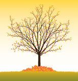 Vector_tree_fall Stock Photography