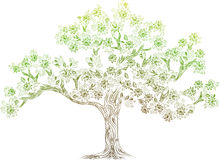 Vector tree with flowes Royalty Free Stock Image