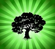Vector Tree with green burst background Royalty Free Stock Photography