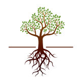 Vector tree and green leafs and roots Stock Photo