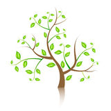 Vector tree illustration Royalty Free Stock Photos