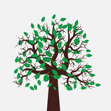 Vector tree illustration. In flat design. Green leaves. Beautiful and stylish image for eco-oriented design Stock Photos