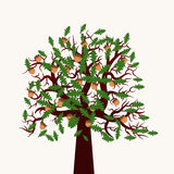 Vector tree illustration. Vector illustration of oak tree with leaves and acorns. Flat design without shadows. Beautiful and stylish vector illustration