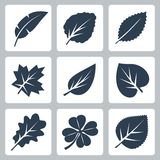 Vector tree leaves icons set Royalty Free Stock Image