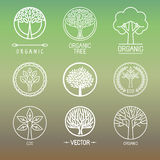 Vector tree logos and badges Royalty Free Stock Image