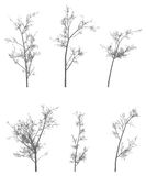 Vector tree pack Stock Photos
