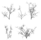 Vector tree pack. Detailed vector tree pack on white background Royalty Free Stock Photos