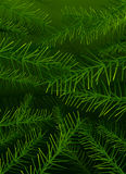 Vector tree pine branches background Royalty Free Stock Photo