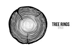 Vector tree rings slice with crack. Annual life texture. Woodgrain pattern. Backround royalty free illustration