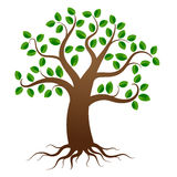Vector tree with roots Stock Image
