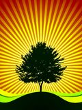 Vector tree on shine background Royalty Free Stock Images