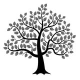 Vector tree silhouette Royalty Free Stock Photography