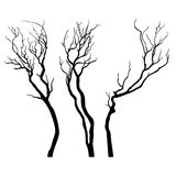 Vector Tree silhouette. Stock Photos