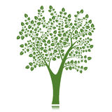 Vector tree silhouette,  on white background Stock Photos