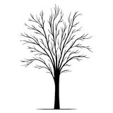 Vector tree silhouette Royalty Free Stock Images