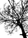 Vector tree silhouette Stock Image