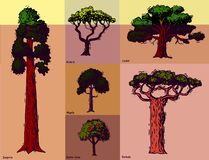 Vector tree sketch hand drawn style types green forest pine treetops collection of birch, cedar and acacia or greenery stock photos