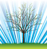 Vector_tree_spring Royalty Free Stock Photo