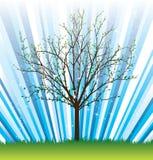 Vector_tree_spring Royalty-vrije Stock Foto