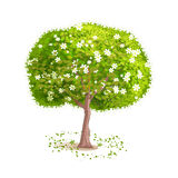 vector tree. Spring tree on a white background. Deciduous tree with green leaves and white flowers. Fallen leaves around the tree. Cartoon style. Vector Stock Photos
