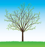 Vector_tree_summer Royalty Free Stock Images