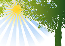 Vector tree and sunshine Royalty Free Stock Photos