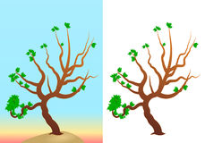 Vector Trees Royalty Free Stock Image
