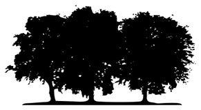 Vector trees stock illustration