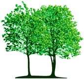 Vector trees Stock Photos