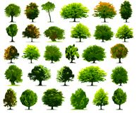 Vector trees. Isolated on white background Royalty Free Stock Images