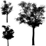 Vector  trees Royalty Free Stock Photo