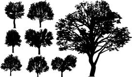 Vector trees royalty free illustration