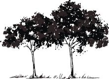 Vector trees. Two vector trees in color black Royalty Free Stock Image