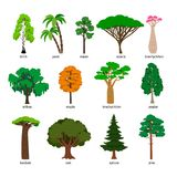 Vector trees. Forest tree set with titles, birch and oak, pine and baobab, acacia and spruce vector. Illustration isolated on white background stock illustration