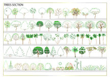 Vector Trees. Image of trees on the plan. Vector Stock Photo
