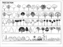 Vector Trees. Image of trees on the plan. Vector royalty free illustration