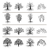 Vector trees with roots, foliage and fallen leaves isolated on white background. Silhouette of tree, and leaf monochrome illustration Stock Image