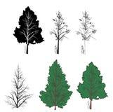 Vector trees Royalty Free Stock Photo
