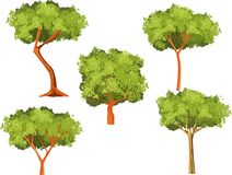 Vector trees set isolated on white vector royalty free stock image