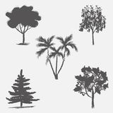 Vector trees in silhouettes. Vector trees in silhouettes for your design. Stroke abstract style Stock Photos