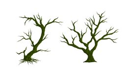Vector  trees  on white background. illustration. Royalty Free Stock Photo