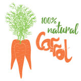 Vector tres zanahorias en el fondo blanco con la cinta verde Fotografía de archivo libre de regalías