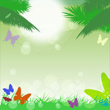 Vector tropical background with l butterflies. Vector tropical background with colorful butterflies, palm trees, grass and bubbles Stock Image