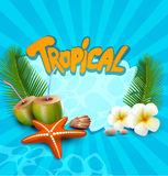 Vector tropical banner with seashells, starfish. The   tropical banner with seashells, starfish Royalty Free Stock Photos