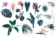 Vector tropical bright blue plants, jungle leaves and flowers set. Isolated on white background stock illustration