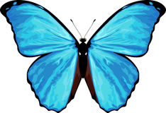 Vector tropical butterfly Morpho menelaus Royalty Free Stock Photo