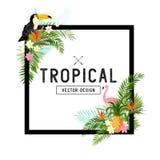 Vector tropical de la frontera Fotos de archivo