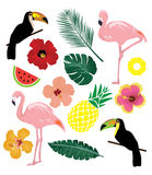Vector Tropical Elements Royalty Free Stock Photo