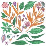 Vector Tropical Flowers and Leaves Set Royalty Free Stock Photo